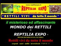 http://www.reptiliaexpo.it
