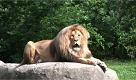 RepTv News, Traldi: il nuovo zoo che mette in gabbia luomo - La Repubblica