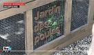 RepTv News, Ginori: tre galline in municipio, così Parigi torna alla natura - La Repubblica