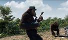 I Coldplay diventano scimmie nel video di Adventure of a lifetime - La Repubblica